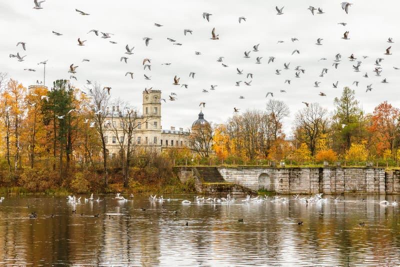 O grande palácio no outono, subúrbio de Gatchina de St Petersburg fotografia de stock royalty free