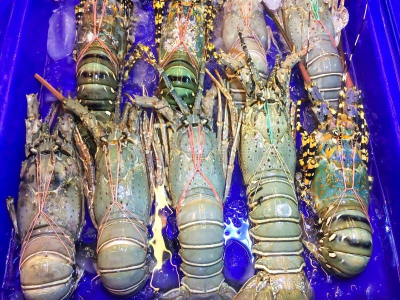 O grande tamanho da lagosta em um azul da bandeja e do recipiente com água no mercado e é popular do turista para o marisco selet fotos de stock royalty free