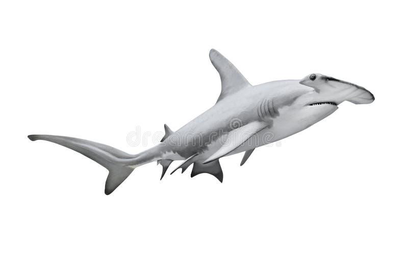 O grande tubarão de Hammerhead fotos de stock