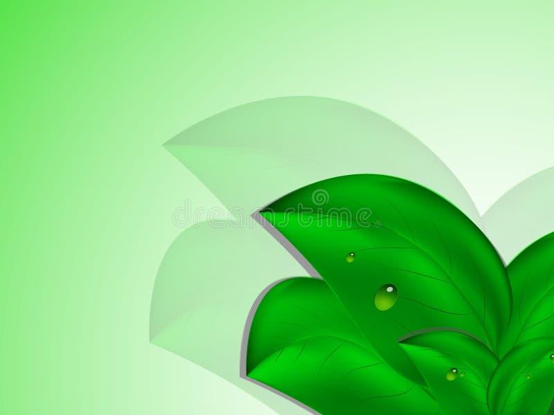 O grande verde sae com as gotas do orvalho no fundo branco verde ilustração royalty free