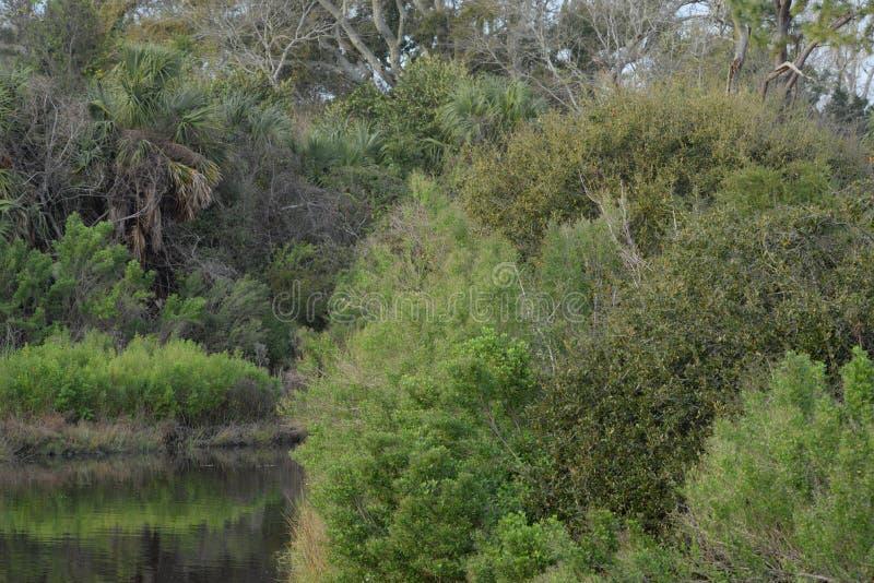 O Greenway em bancos da via navegável de Amelia Island é luxúria e verde imagens de stock royalty free