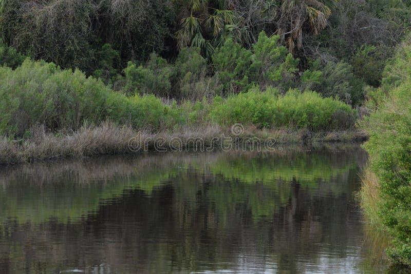 O Greenway em bancos da via navegável de Amelia Island fornece a tampa luxúria para animais selvagens fotos de stock