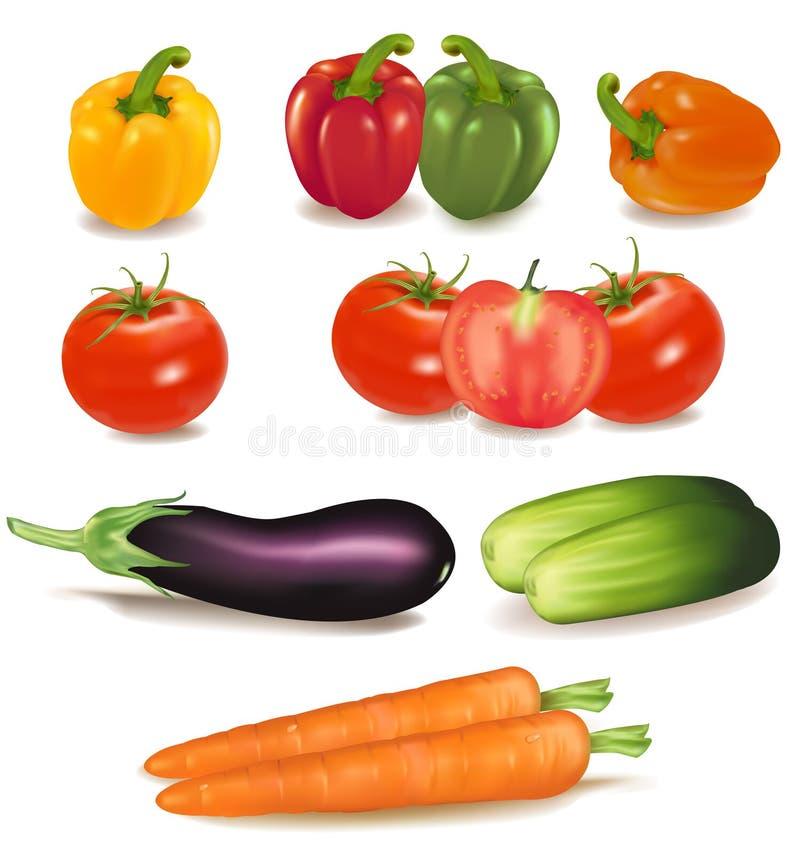 O grupo colorido grande de vegetais maduros. ilustração do vetor