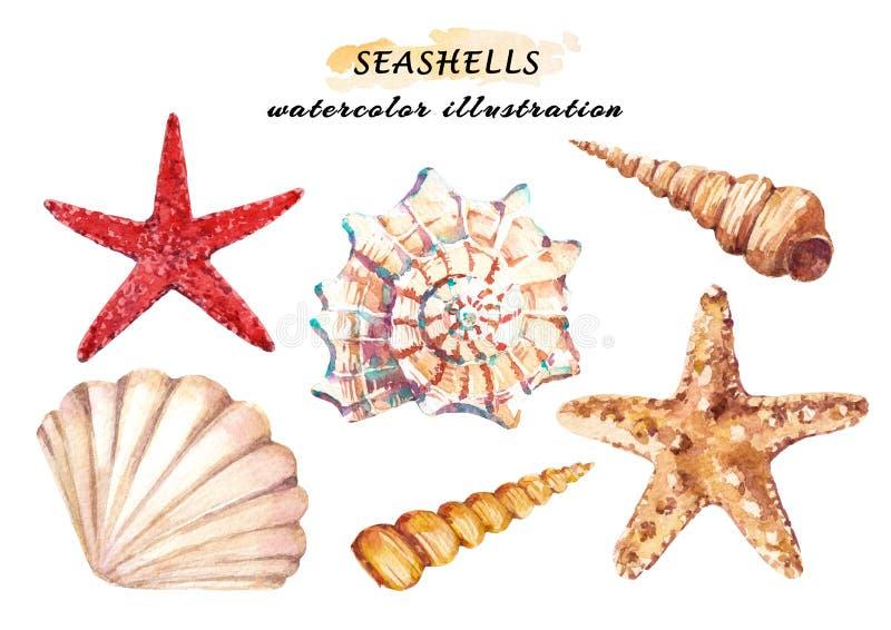 O grupo da aquarela de vida subaquática objeta - várias conchas do mar e estrela do mar tropicais ilustração stock