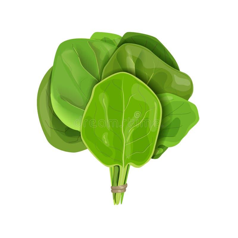 O grupo das folhas cruas suculentas frescas dos espinafres fecha-se acima do isolado no branco Dieta saudável, alimento do vegeta ilustração do vetor