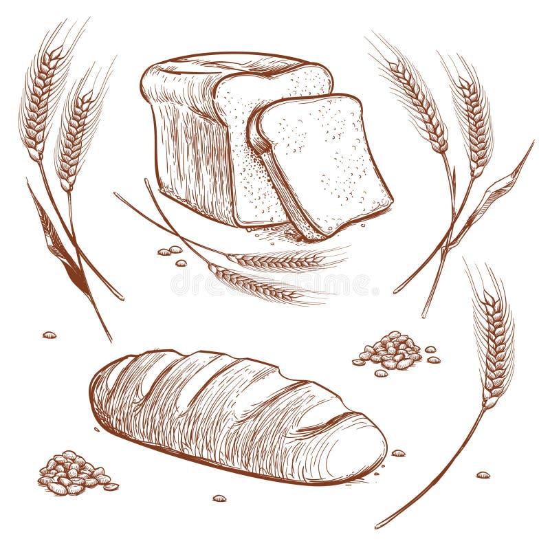 O grupo das orelhas do trigo e o pão entregam a ilustração tirada do vetor no estilo da gravura do vintage, ícones do esboço da p ilustração royalty free