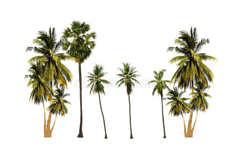 O grupo de árvore do açúcar da palma e de árvore de coco isoladas no fundo branco olha fresco e bonito fotos de stock