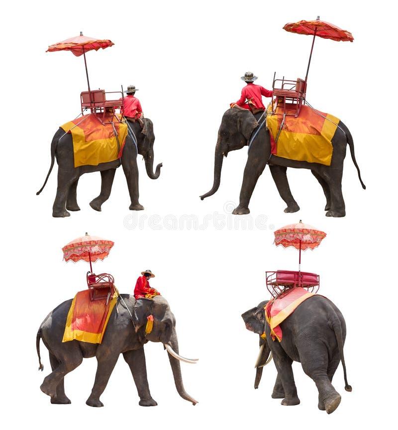 O grupo de elefante para turistas monta a excursão da cidade antiga no Th fotografia de stock royalty free