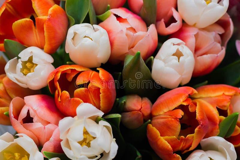 o grupo de flores frescas do rosa, as vermelhas e as brancas da tulipa fecha-se acima foto de stock royalty free