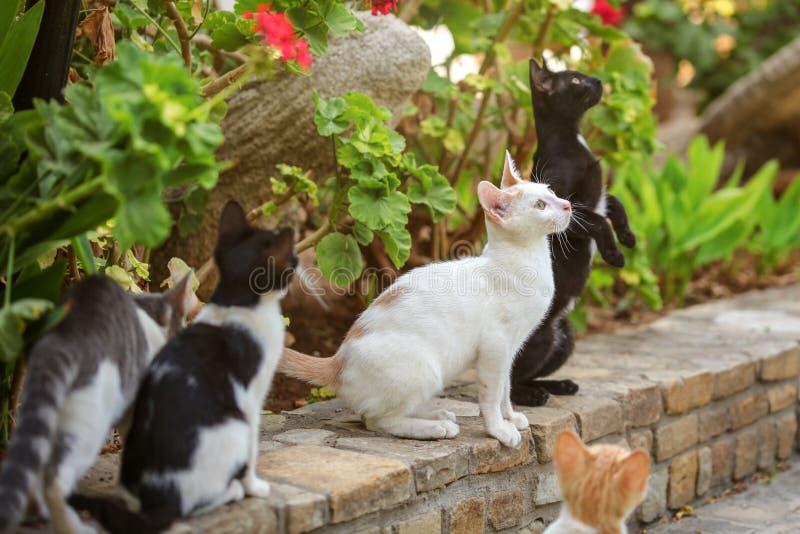 O grupo de gatos dispersos, olhando acima com suas cabeças, esperando algum alimento a ser jogado, as folhas verdes estaciona no  fotos de stock royalty free