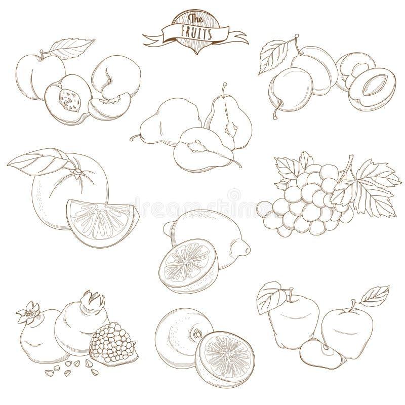 O grupo de mão do esboço tirado frutifica com folhas (maçã, pera, apric ilustração royalty free