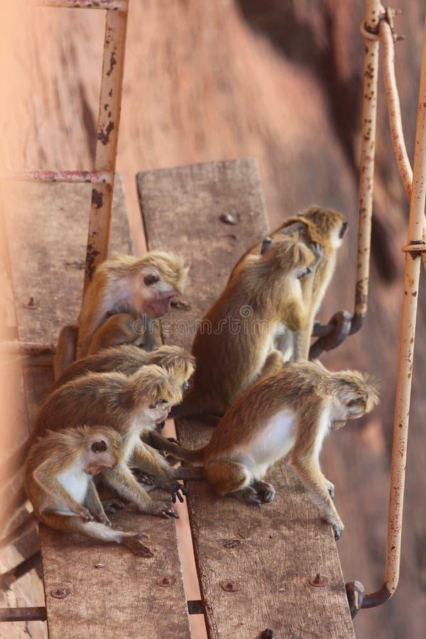 O grupo de macacos senta-se em suportar foto de stock