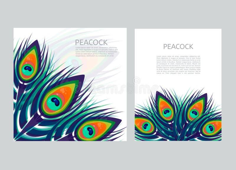 O grupo de molde colorido criativo do cabeçalho com pavão empluma-se ilustração stock
