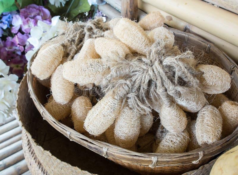 O grupo de natural bordeja esponjas na cesta tradicional do Rattan feita do uso seco do abobrinha para que para que os acessórios fotos de stock royalty free