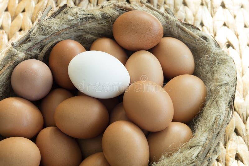 O grupo de ovos idênticos da galinha exceptua um fotografia de stock royalty free