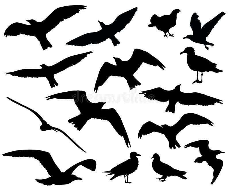 O grupo de pássaros mostra em silhueta 15 em 1 no fundo branco ilustração do vetor
