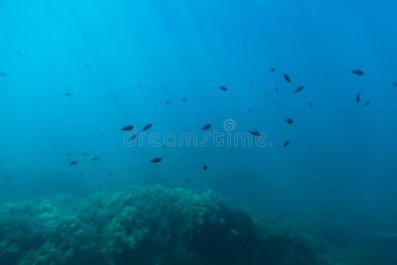 O grupo de peixes e de sol pretos irradia no underwater Vida marinha no oceano imagem de stock