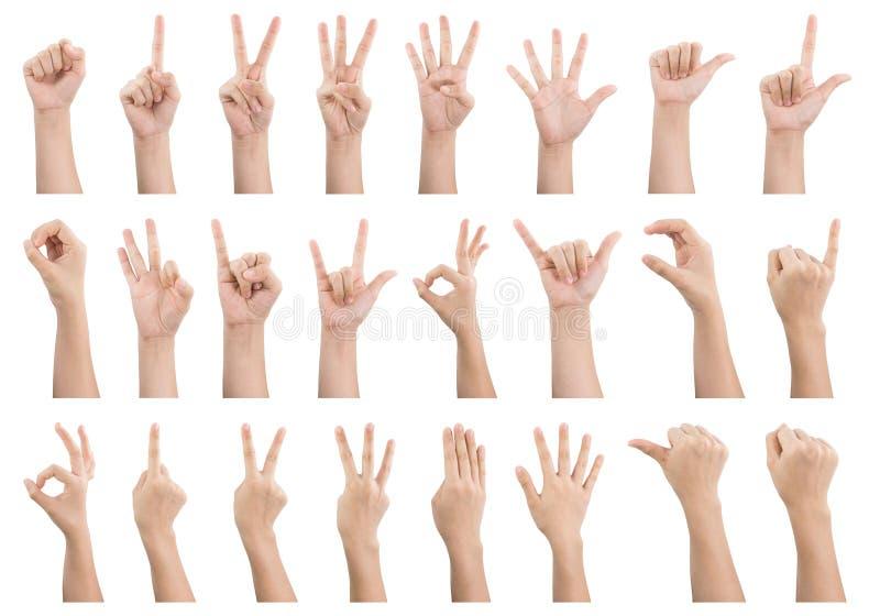 O grupo de vários gestos e o sinal do ` s da mulher entregam isolado no whi fotos de stock royalty free