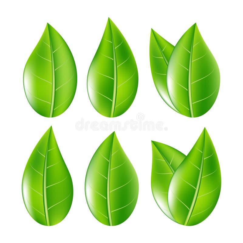 O grupo de verde realístico sae da coleção Ilustração do vetor ilustração royalty free