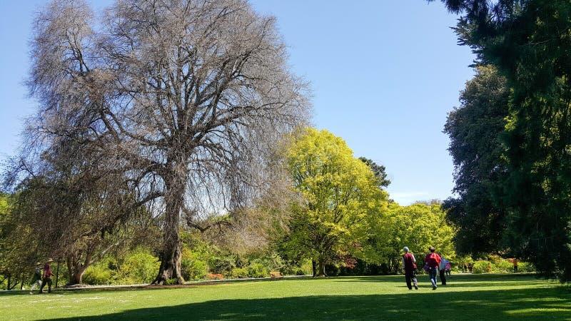 O grupo de viajantes aprecia o jardim botânico de christchurch imagens de stock royalty free