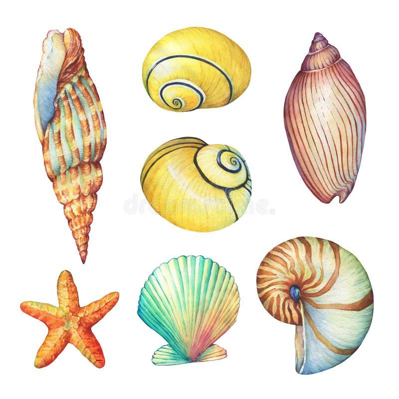 O grupo de vida subaquática objeta - ilustrações de várias conchas do mar e estrela do mar tropicais ilustração do vetor