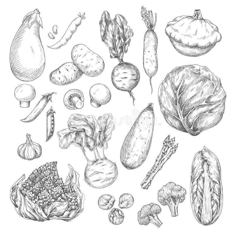 O grupo do esboço do vegetal e do cogumelo para o alimento projeta ilustração royalty free