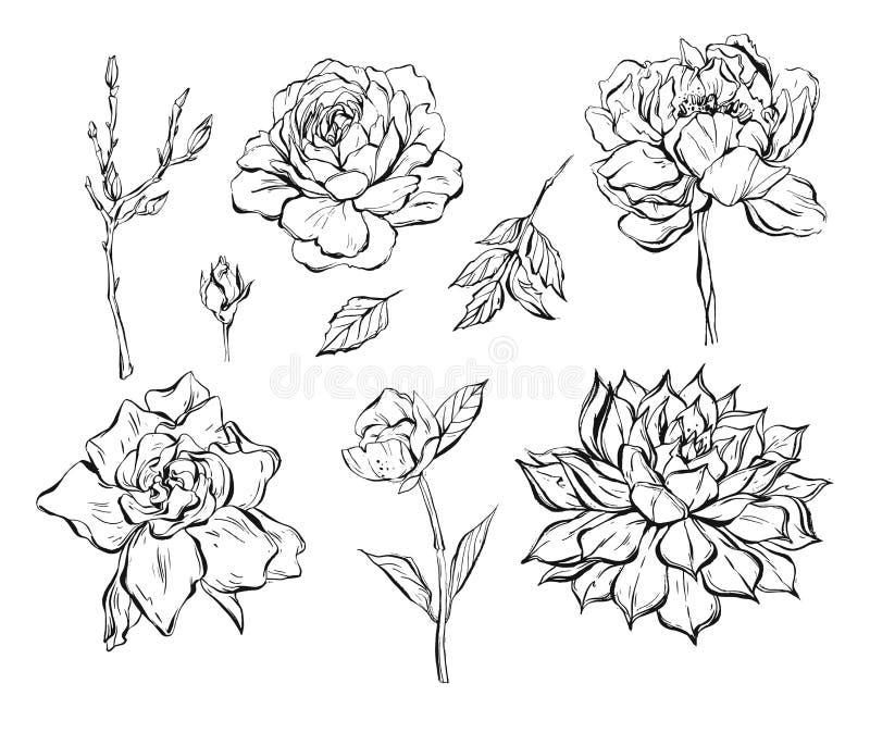 O grupo gráfico tirado mão da coleção das flores da tinta do sumário do vetor com aumentou, refeições matinais, peônia, planta ca ilustração stock