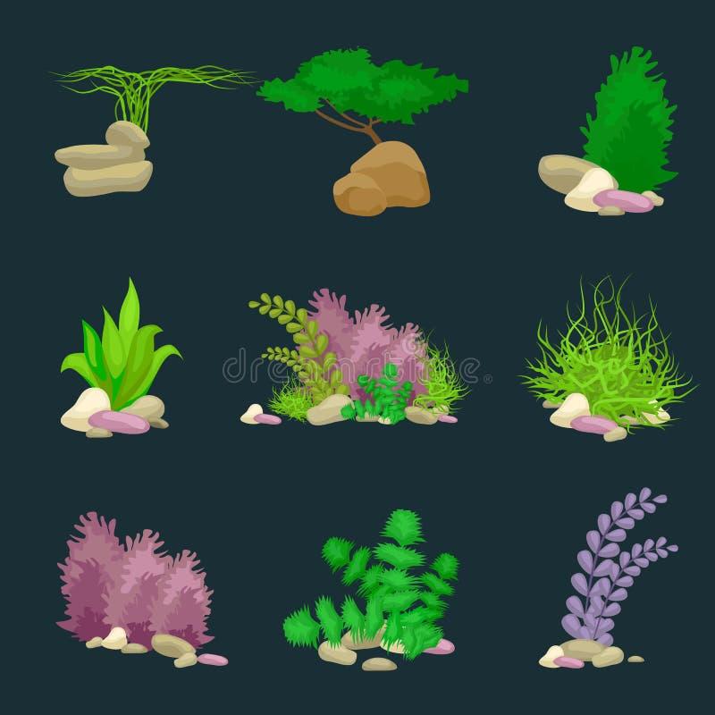 O grupo isolou corais e algas coloridos, flora subaquática do vetor, fauna ilustração royalty free