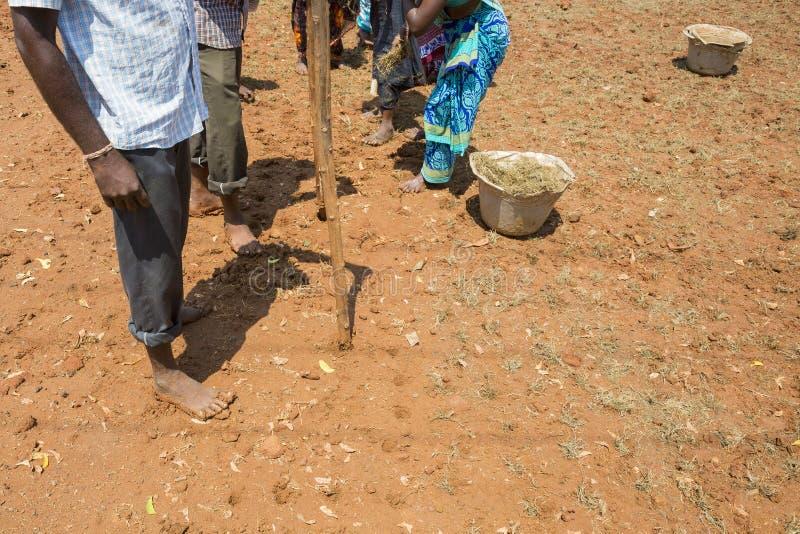 O grupo não identificado de planta dos fazendeiros dos homens das mulheres transplantou a grama para crescer fotos de stock