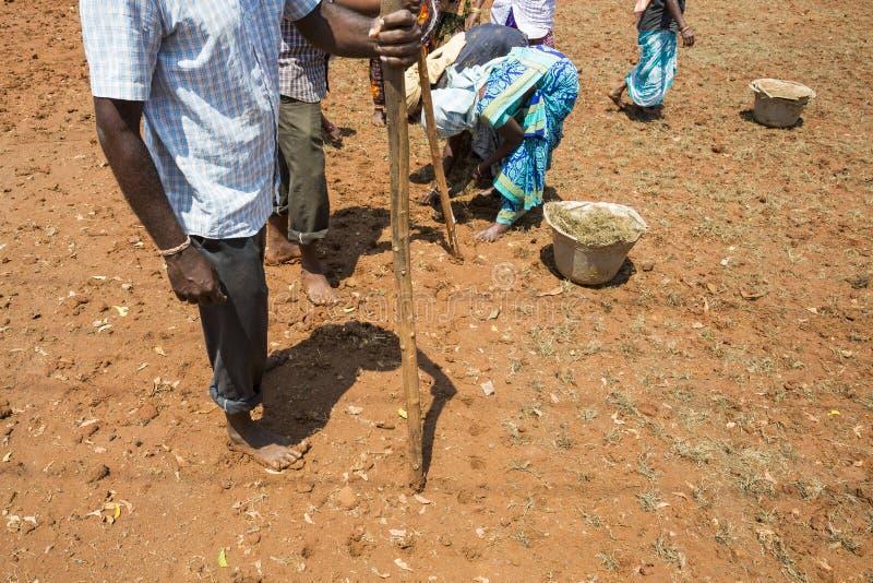 O grupo não identificado de planta dos fazendeiros dos homens das mulheres transplantou a grama para crescer imagens de stock