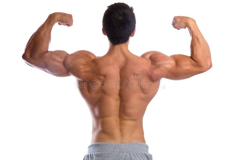 O halterofilismo do halterofilista muscles o construtor de corpo que constrói o bice traseiro imagens de stock