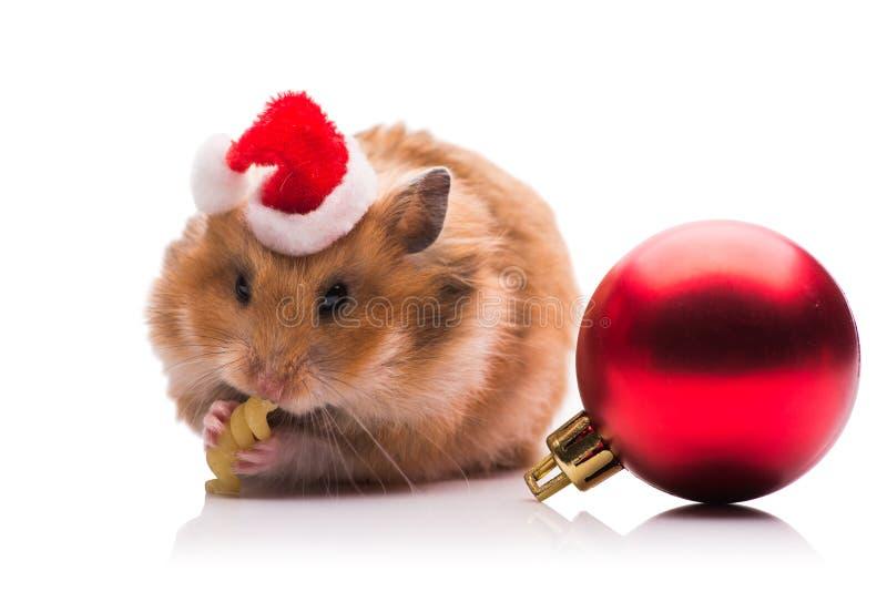 O hamster bonito com o chapéu de Santa isolado no branco imagem de stock