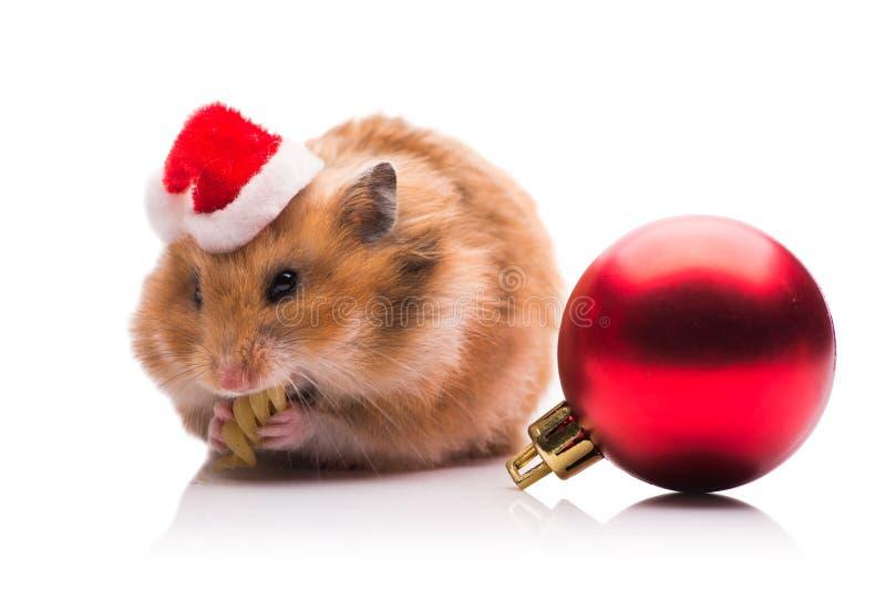 O hamster bonito com o chapéu de Santa isolado no branco foto de stock