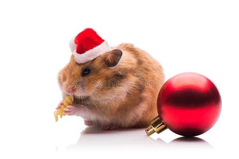 O hamster bonito com o chapéu de Santa isolado no branco imagens de stock royalty free