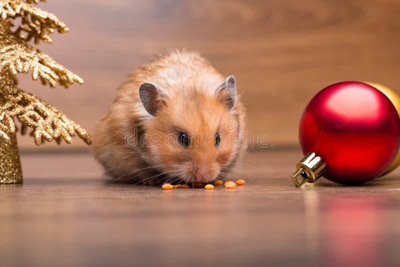 O hamster bonito com o chapéu de Santa na tabela fotos de stock