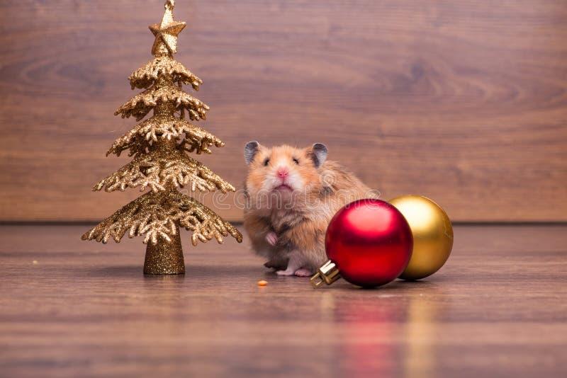 O hamster bonito com o chapéu de Santa na tabela imagens de stock royalty free
