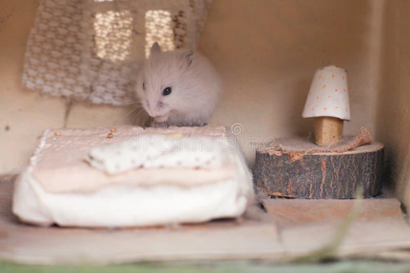 O hamster engraçado pequeno na cama em um pequeno imagina em casa Casa pequena para hamster Quarto para roedores imagens de stock royalty free