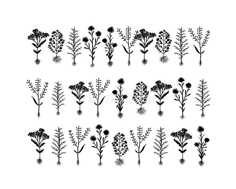 O herbário floresce com raizes, esboço para o seu ilustração do vetor