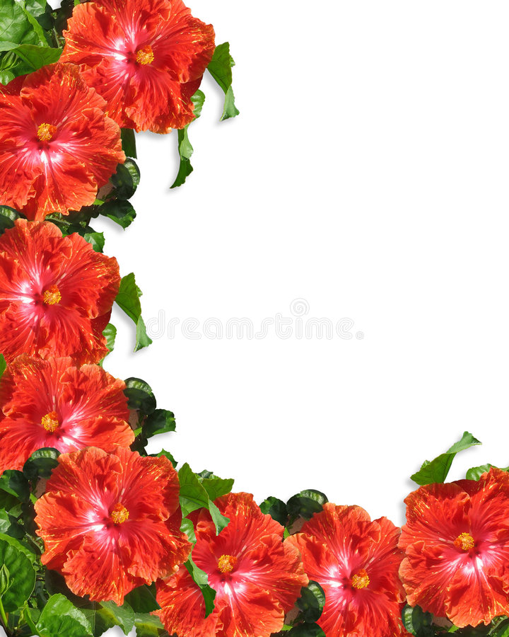 O hibiscus floresce o fundo da beira ilustração do vetor