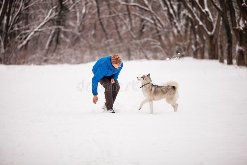 O homem anda o cão de puxar trenós foto de stock