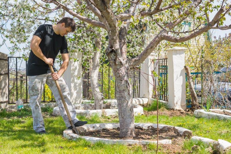 O homem cava troncos de árvores de fruto na casa de campo do verão foto de stock royalty free
