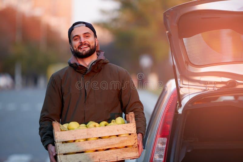 O homem com a caixa de madeira de maçãs douradas maduras amarelas na exploração agrícola do pomar carrega-à seu tronco de carro C imagem de stock