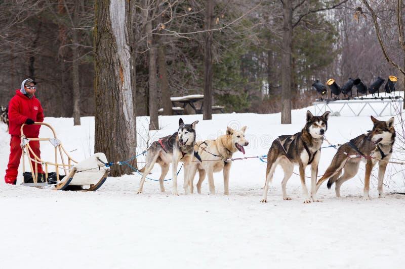 O homem com seus cães que oferecem o trenó monta durante o festival da neve de Montreal fotos de stock royalty free