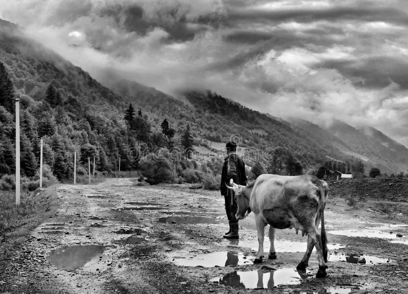 O homem com a vaca nas montanhas foto de stock