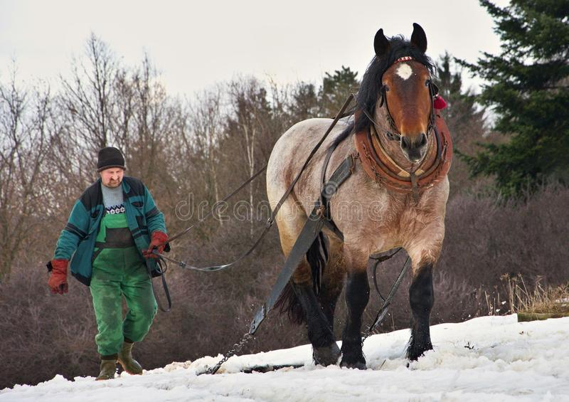 O homem conduz o cavalo de trabalho na neve fotografia de stock royalty free