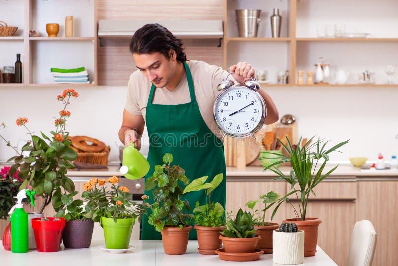O homem consider?vel novo que cultiva flores em casa fotos de stock royalty free