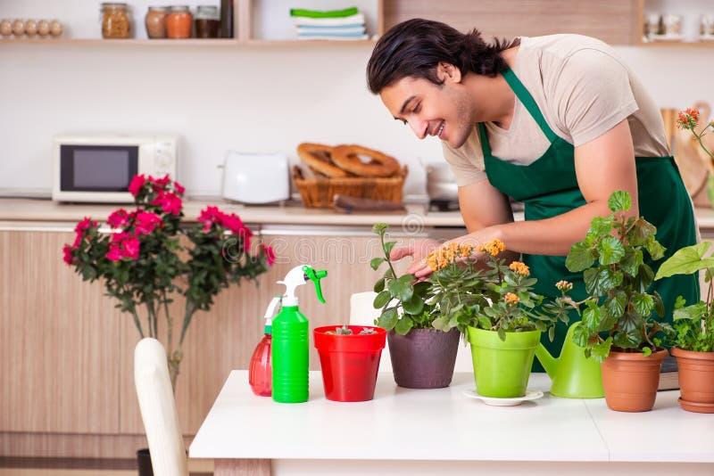 O homem consider?vel novo que cultiva flores em casa imagens de stock royalty free
