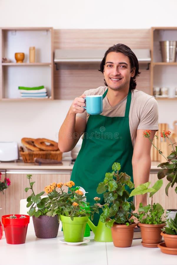 O homem consider?vel novo que cultiva flores em casa foto de stock