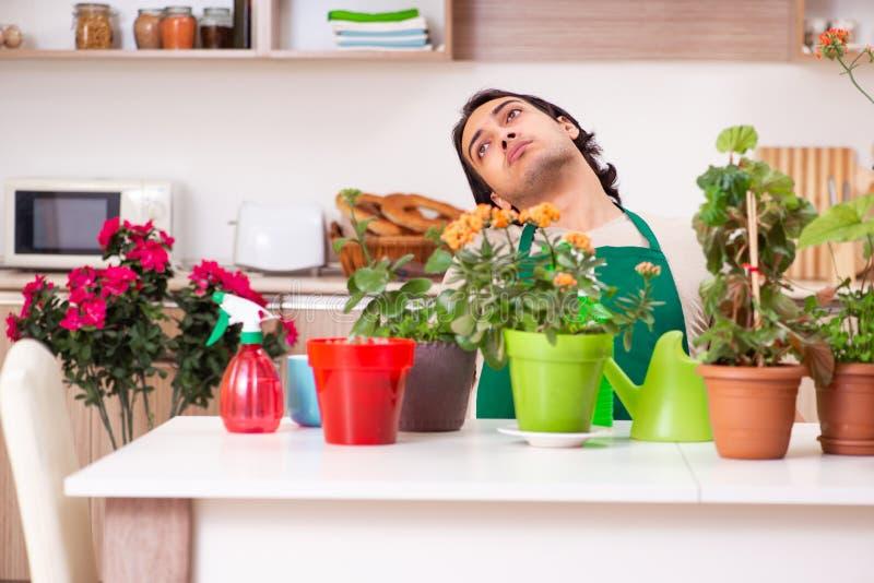 O homem consider?vel novo que cultiva flores em casa fotografia de stock
