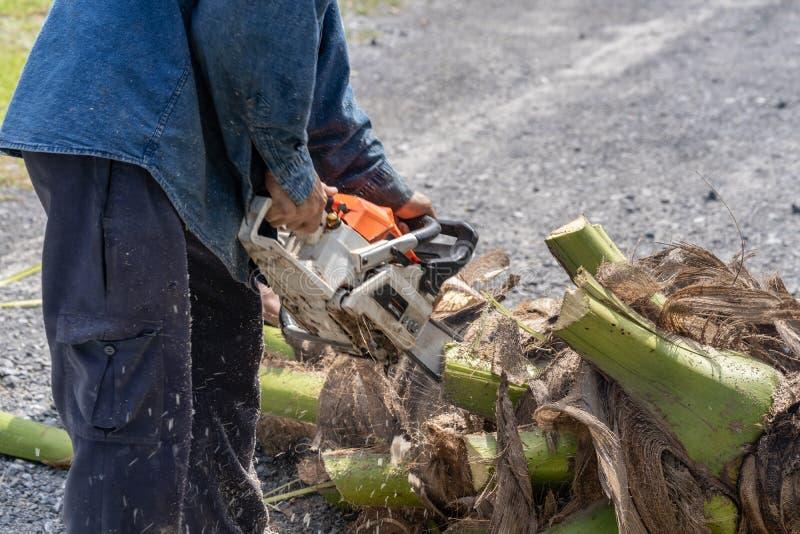 O homem corta a árvore do felling da árvore com serra de cadeia Árvore do corte da ocupação fotos de stock royalty free